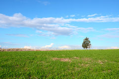 A single tree on a green field Stock Photo