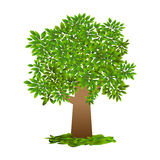 single tree, green leaf, vector on white background Royalty Free Stock Photo