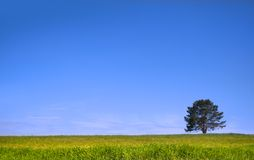Single tree on a green meadow Stock Photo