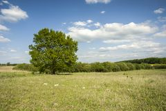 Single tree in the green meadow and clouds in the sky