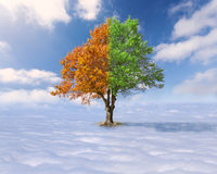 Single tree with green and red leaves above the clouds Stock Images