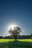 Single tree, greenfield and forest Royalty Free Stock Images