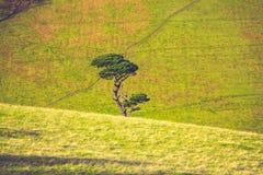 Single tree growing amongst rolling green hills Stock Photo