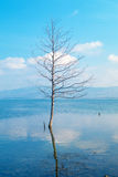 Single tree growing in bog lake at misty morning Royalty Free Stock Photo