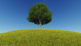 Single Tree Growing grass wind.  stock footage