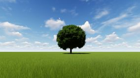 Single tree growing time lapse with wind stock illustration