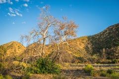 Tree in California Valley Stock Photos