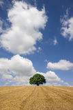 Single tree and hay in rural farm field Stock Photo