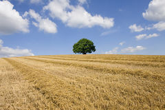 Single tree and hay in rural farm field Royalty Free Stock Photos