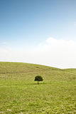 Single tree on hill Stock Images