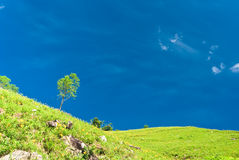 Single tree on hill with beautiful cloudscape back Stock Photography