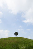 Single tree on a hill. Stock Photo