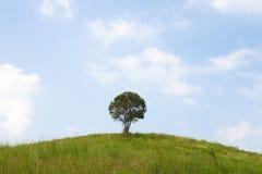 Single tree on a hill. Stock Photos