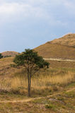 Single tree on hill Royalty Free Stock Photography