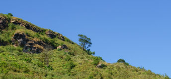 Single Tree on Hill Stock Photography