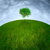 Single tree on hill Stock Photo