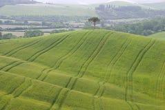 Single tree on the hill Stock Photo