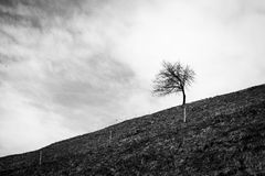 Single tree on a hill Stock Photos