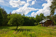 Single tree and a house on the meadow Stock Photo