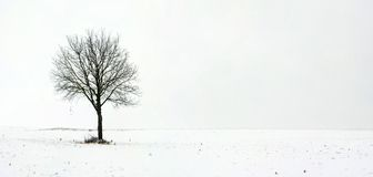 Free Single Tree In Field During First Snow Stock Photos - 3661223