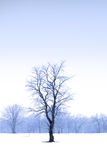 Single Tree In The Middle Of Snow Royalty Free Stock Photography