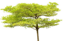 Single tree isolated Stock Images