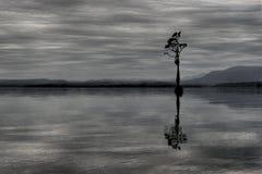 Single tree in Lake Brunner New Zealand. Single tree in Lake Brunner, New Zealand Stock Photos