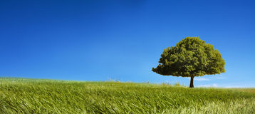 Single tree landscape. With copy space royalty free stock images