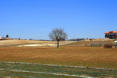 Single tree in landscape Stock Image