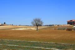 Single tree in landscape Stock Image