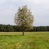 Single tree in landscape Royalty Free Stock Photography