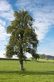 Single tree in landscape Stock Images