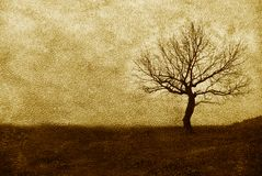 Single tree on leather texture Stock Images