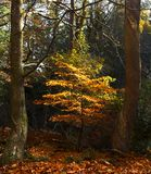 Sunbeam in Autumn Royalty Free Stock Images