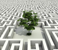 Single tree lost in endless labyrinth Royalty Free Stock Photos