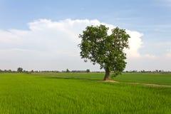 Single tree. Royalty Free Stock Photos