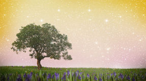 Single tree on a meadow Royalty Free Stock Photography