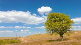 Single tree in the meadow. Against the blue sky with white clouds, dirt road nearby stock footage