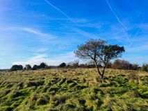 Single tree on a meadow Stock Images