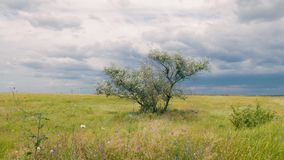 Single tree in a meadow. On cloud background stock video footage