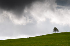 Single tree on a meadow with a dark sky Royalty Free Stock Image