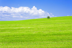 Single tree on a meadow Stock Photography
