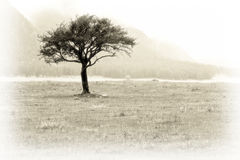 Single tree on meadow. Lonely single tree on a meadow by autumn day with fog and mist in a mountain area. Image gas been made in an old photo style Royalty Free Stock Photos