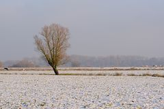 Lone bare tree in a winter landscape in Bourgoyen nature reserve, Ghent, Belgium Stock Photo