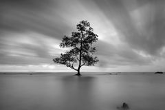 Single tree in the middle of the sea. A tree growth in the middle of the sea at laguna beach , banten. indonesia royalty free stock image