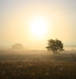 Single tree in mist. Morning landscape with single tree in mist royalty free stock photo