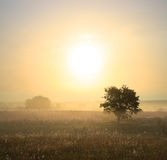 Single tree in mist Royalty Free Stock Photos