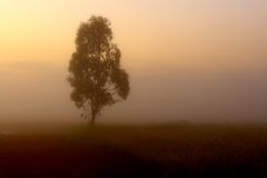 Single tree in the mist Royalty Free Stock Photos