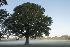 A single tree in the mist on Southampton Common stock photo