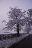 Single tree with misty background. Taken in Marlow area Stock Image